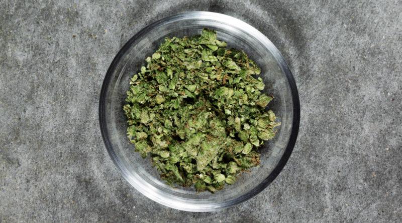 Cannabis, marijuana, ganja, THC, Elena Blum, drogue en europe, Cannabis en Europe, ICE, Weed like to talk, Elena Blum