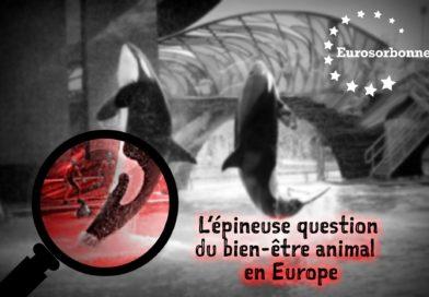 L'épineuse question du bien-être animal en Europe